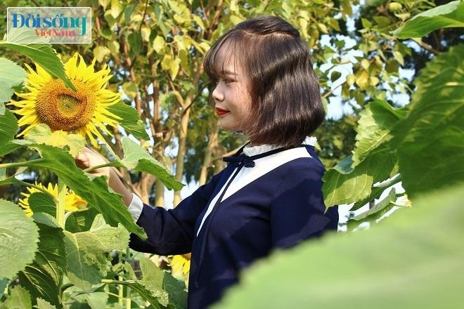 Giới trẻ Hà thành tự sướng bên vườn hoa hướng dương11