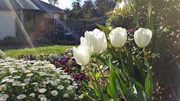 """Mẹ Việt tại Úc chia sẻ mảnh vườn """"trăm loài hoa nở"""" rực rỡ như thế giới cổ tích"""