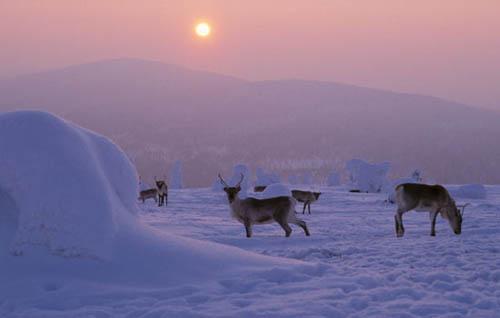Lâu đài tuyết ở Kemi, Lapland, cách vòng Bắc Cực chưa đầy 160 km. Ảnh: Pinterest.