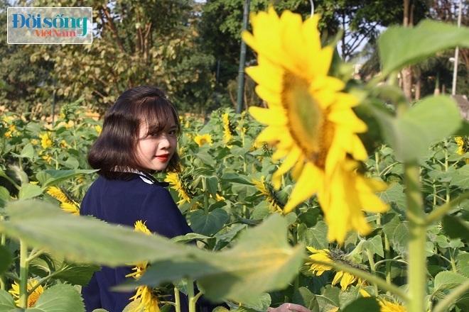 Giới trẻ Hà thành tự sướng bên vườn hoa hướng dương4