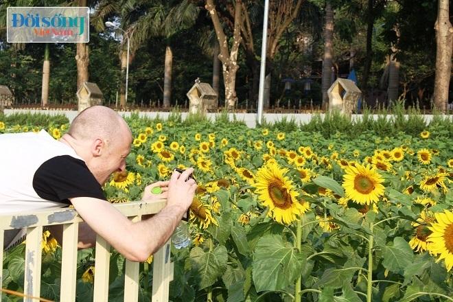 Giới trẻ Hà thành tự sướng bên vườn hoa hướng dương8