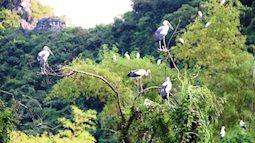 Không chỉ có Bái Đính, Ninh Bình còn có Đảo Chim đẹp mê hồn, y như phim kiếm hiệp