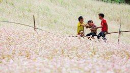 Tháng 11 này, đừng lỡ hẹn với lễ hội hoa Tam giác mạch ở cao nguyên đá Hà Giang