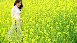 3 địa điểm chụp ảnh hoa cải vàng đầu đông được giới trẻ check – in rần rần