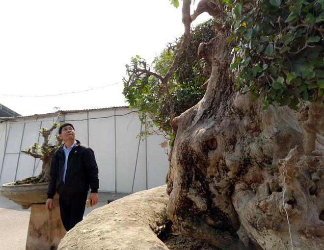Choáng ngợp với cây duối tình mẫu tử hét giá 15 tỷ tại hội chợ Tết ở Hà Nội - Ảnh 8.