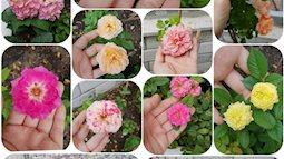 MC Thanh Thảo xả stress bằng sở thích trồng hoa