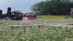 Lạ lẫm mùa hoa tam giác mạch tại Hà Nội