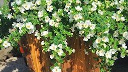 Mẹ Việt ở Mỹ trồng vườn hoa 800 m2 giúp con vượt qua bệnh tự kỷ