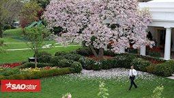 Những khu vườn bí mật trong khuôn viên Nhà Trắng