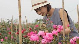 Ngắm khu vườn hoa hồng rộng đến 3 ha đẹp ngất ngây giúp cô gái 27 tuổi thoát khỏi bệnh trầm cảm ở Hà Nội