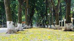 Phố phường Hà Nội trải thảm lá vàng