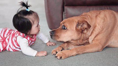 Baby chụp ảnh cùng thú cưng, siêu yêu hết nấc