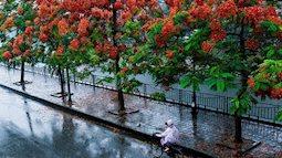 Cảnh báo mưa lớn diện rộng ở miền Bắc và Bắc Trung Bộ