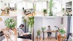 Cây xanh, cách làm mới không gian sống, nhanh, rẻ, dễ ứng dụng để đón hè vào nhà