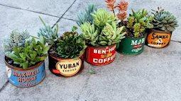 Những chậu trồng cây mang lại sắc màu trang trí lạ cho căn nhà