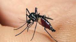 Phát hiện thêm một virus do muỗi truyền sang người
