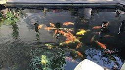 Muôn kiểu hồ cá độc đáo trong biệt thự tiền tỷ của sao Việt khiến fan choáng ngợp