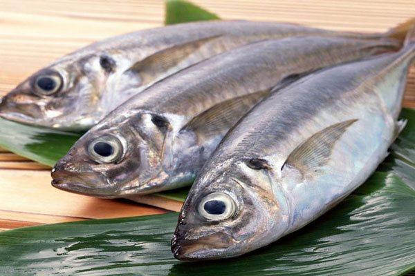 Cá biển không tốt cho sức khỏe những người mắc bệnh gout hình ảnh