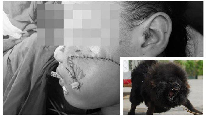 Ngao Tây Tạng cắn chết bé gái 8 tháng: Nhìn lại những sự vụ xót xa, cha mẹ phải cẩn thận trên từng cây số