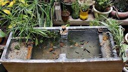 Bố khéo tay tự làm bể cá đẹp long lanh từ thùng xốp đựng hoa quả