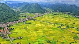 Mùa lúa chín vàng ở Thung lũng Bắc Sơn, đẹp mê lòng người