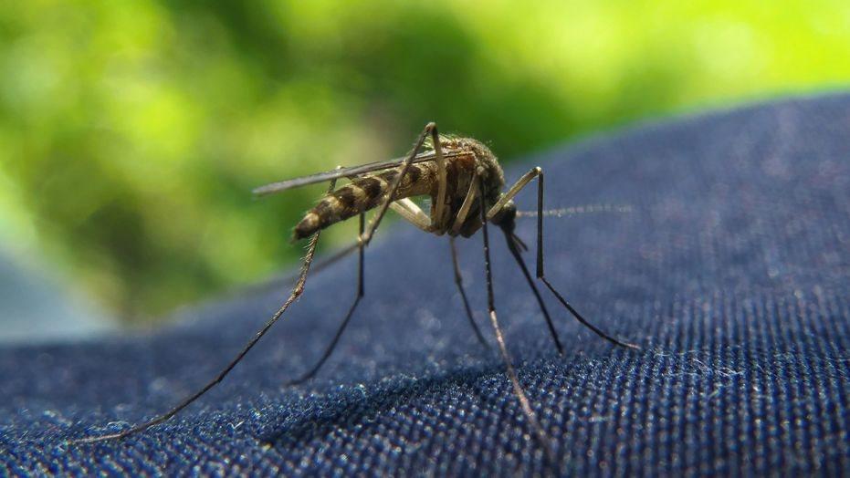 Bí kíp đơn giản chống muỗi hiệu quả cho cả gia đình
