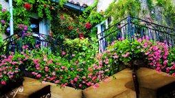 Cách làm giảm nắng nóng nhờ những giàn hoa khắp sân vườn, ban công