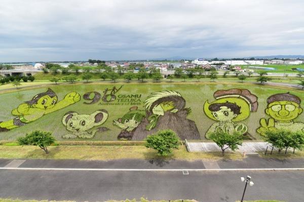 Ngắm nông dân Nhật Bản 'vẽ tranh' trên lúa