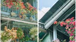 Căn nhà ngập tràn hoa và cây cảnh thơ mộng ở An Giang bị mất hơn 10 chậu cây