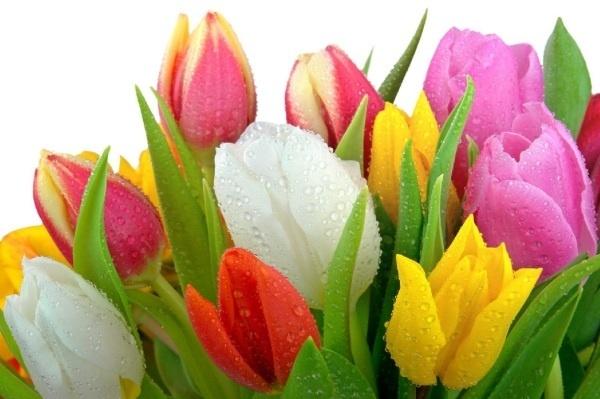 7 loại hoa có thể gây sảy thai, dị tật thai nhi, nhà có mẹ bầu tuyệt đối đừng mua về cắm