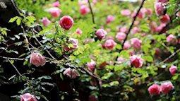 Ông bố trẻ ở Hưng Yên quyết tâm xới đất làm vườn, xây nhà hoa hồng cho vợ con
