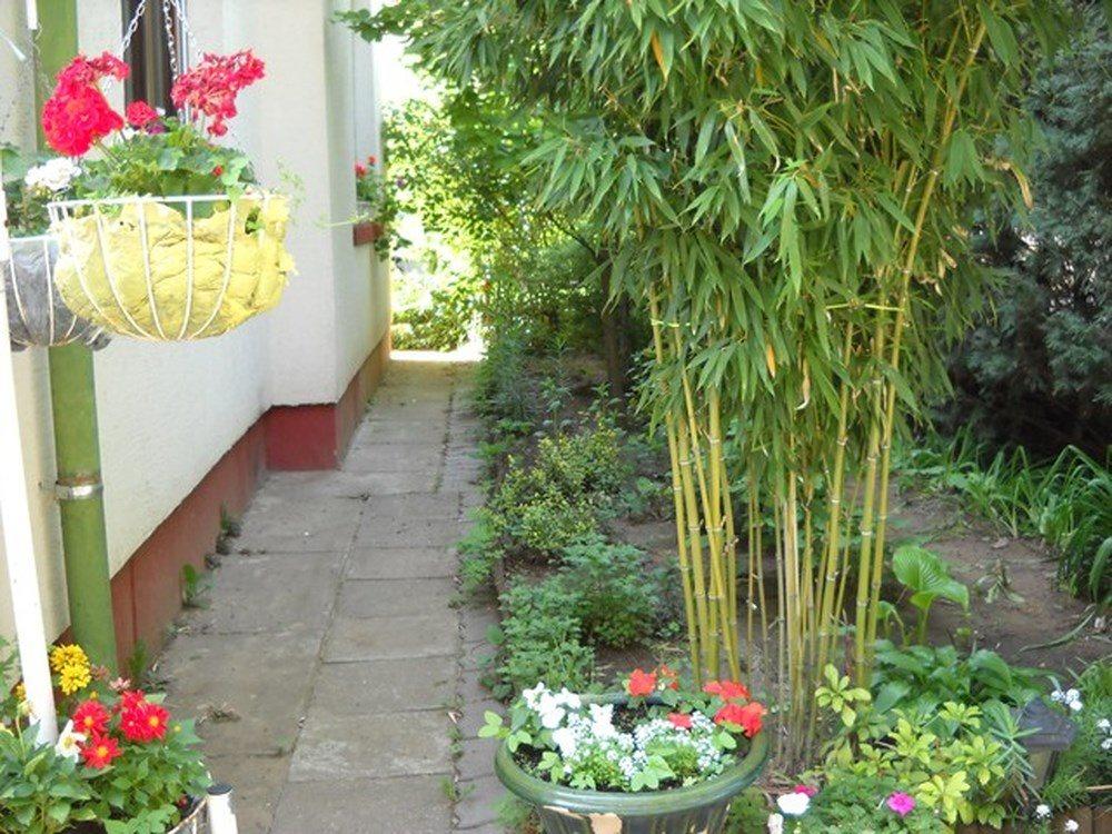 4 điều nên tránh khi trồng cây xung quanh nhà hình ảnh