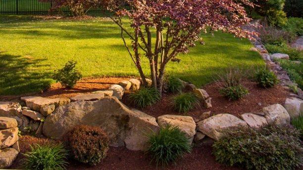 4 điều nên tránh khi trồng cây xung quanh nhà