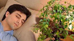 Muốn giấc ngủ thật ngon, chớ bỏ qua một trong những loại cây trồng trong phòng ngủ sau