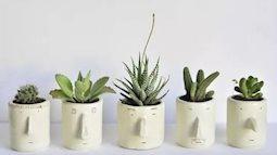 Nên trồng cây xanh gì trong nhà để có ích cho sức khỏe