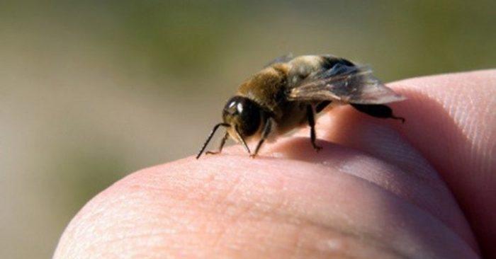 Ong ở nước ta chủ yếu tập trung ở những vùng rừng núi hình ảnh
