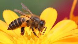 Biện pháp xử lý khi bị ong đốt