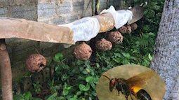 Cách xử lý khi bị ong vò vẽ đốt để giảm nguy cơ tử vong