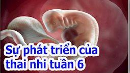 Thai nhi tuần thứ sáu: Nghe tiếng tim thai thiêng liêng