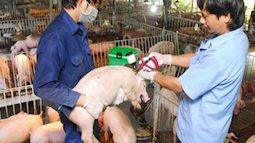 Cảnh báo: Dịch tả lợn châu Phi đáng sợ, nguy hiểm và khó tiêu diệt thế nào?