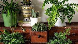 13 bí quyết trồng cây từ những đồ vất đi giúp sở hữu không gian xanh sạch đẹp
