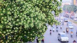 Những điểm dừng chân nếu bạn muốn biết mùa thu Hà Nội đẹp nhường nào
