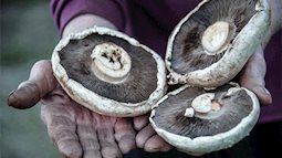 Phát hiện thú vị: loài nấm đặc biệt có khả năng phân hủy nhanh các chất thải nhựa