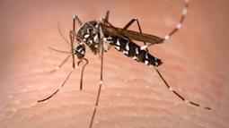 Diệt muỗi bằng cách chỉnh sửa bộ gene của chúng, nghiên cứu thú vị