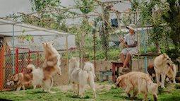 Khu rừng dành cho thú cưng đáng mơ ước của cặp đôi Sài Gòn bỏ phố về làng