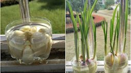 Tự trồng 8 loại cây gia vị vừa đẹp lại ăn thoải mái mà không cần hạt giống, ai cũng phải mê