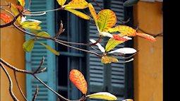 Đến đây để sống chậm trong những ngày gió lạnh đầu mùa ở Hà Nội