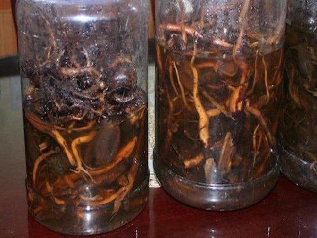 Cảnh báo nguy cơ mất mạng vì rượu ngâm rễ cây