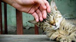 Bạn có thể bị nấm da từ thói quen nuôi thú cưng trong nhà