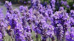 Điểm danh những loại hoa cực tốt cho sức khỏe nhà ai cũng nên có một cây